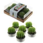 Fun Decorative Single Cactus Candles - Set of 6 Tea Lights