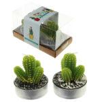 Fun Decorative Spiky Cactus Candles - Set of 2 Tea Lights